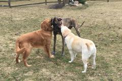 """Sharing"" a stick with our BFF's, Jake & Bella"