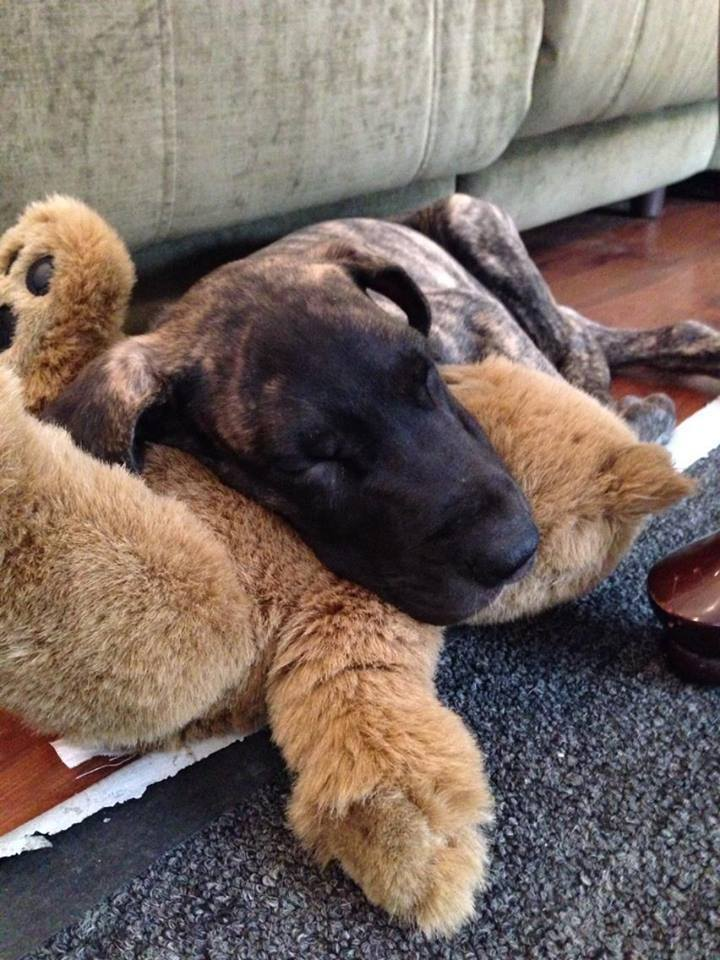 Lucy has always loved her stuffed animals.